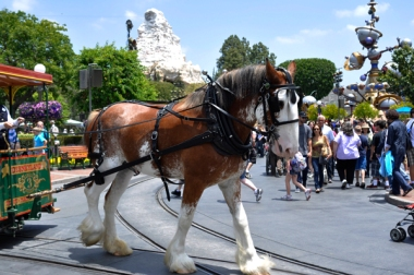 2011 Disney 01